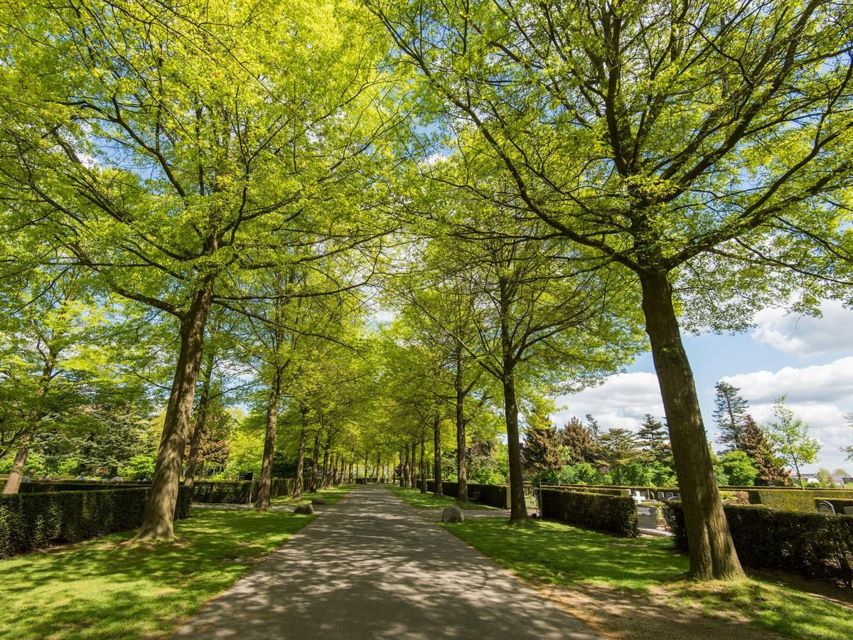 Begraafplaats Munnikenhof in Veenendaal wordt ook gedenkplaats.